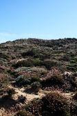 Dune vegetation — Stock Photo