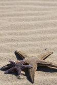 Starfish on the sand — ストック写真