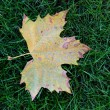 Stock Photo: Leaf on grass
