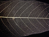 Leaf nerves — Stock Photo