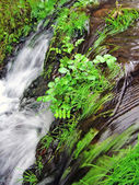 Waterfall stream — Stock Photo