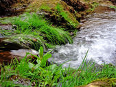 Stream of life — Stock Photo