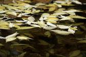 Pond with leafs — Stockfoto