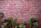 Brick wall with palms — Stock Photo