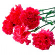 Flower bouqet carnation isolated — Stock Photo