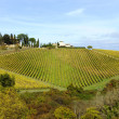 Foto Stock: Vineyard in Tuscany