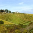 Stock Photo: Vineyard in Tuscany