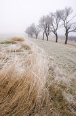 Countryside in the winter time — Stock Photo