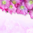 Decorative card with flowers mallow — Stock Photo
