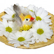 Chicken in nest with flowers — Stock Photo #5260563
