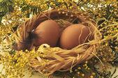 Oeufs de pâques dans un nid — Photo