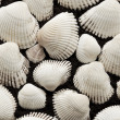 Secockleshells of white color — Stock Photo #5367720