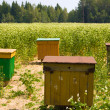 Apiary in the field — Stock Photo #5260543