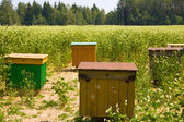 Apiary in the field — Stock Photo