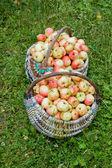 Jabłka w kosz — Zdjęcie stockowe