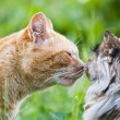 Cat kiss - Stock Photo