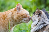 Cat kiss — Stock Photo