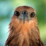 Eagle eye — Stock Photo