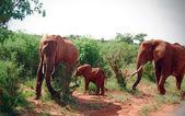 Elephants family — Stock Photo