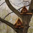 Two birds houses — Stock Photo #5369519
