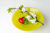 Plum blossom over heart on plate — Stock Photo