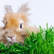 Stock Photo: Easter Bunny. Cute rabbit sitting on green grass.