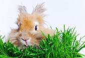 Easter Bunny. Cute rabbit sitting on green grass. — Stock Photo
