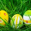 Easter eggs are colored in green spring grass — Stock Photo