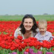 In Tulip Field. Mother with son in tulips field — Stock Photo #5283165