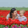 In Tulip Field. Mother with son in tulips field — Stock Photo #5283174