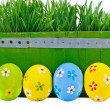 Easter eggs next to the bucket with the green grass — Stock Photo