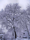 Deep snow covered trees — Stock Photo