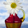 White  Daisy in red, orange and yellow  Bottle — Stock Photo