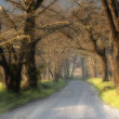 Gravel country road with fog - Stock Photo