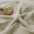 Shell and Starfish on sand — Stock Photo