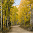 Colorado Golden  Fall Road - Stock Photo