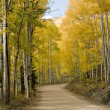 Royalty-Free Stock Photo: Colorado Golden  Fall Road