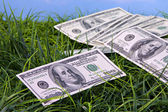 US Currency in grass — Stock Photo