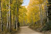 Colorado Golden Fall Road — Stock Photo