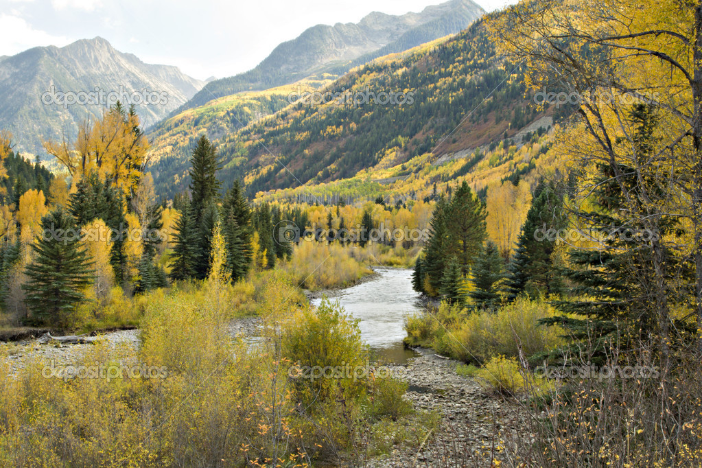 Colorado Autumn with golden aspens, green firs, winding mountain stream and beautiful blue sky  Stock Photo #5330285