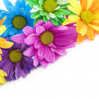 Colorful High Key Daisies — Stock Photo #5360613