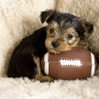 Yorkshire Terrier Puppy with Toy Football — Stock Photo