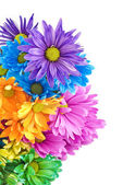 Bright Colored Daisies White Background — Stock Photo