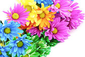 Colorful Daisies — Stock Photo