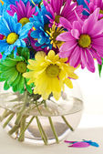 Colorful Daisies In Vase — Stock Photo