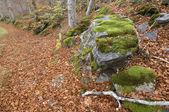 Přirozený les — Stock fotografie