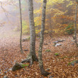 Forest in autumn - Photo