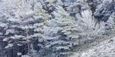 Снегопад — Стоковое фото
