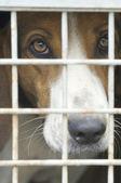 Dog cage — Stock Photo
