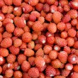 Wild strawberry - Stock Photo